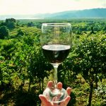 8 Tips For Your First Wine Tasting