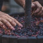 The Different Types of Wine: A Complete Guide