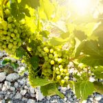 Rare Wines:11 Types Of Wines You Never Thought Existed
