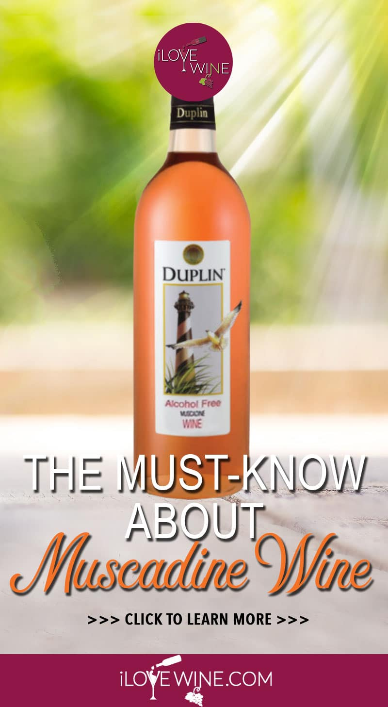 With the right understanding and awareness, there's a lot to love about Muscadine Wine. Not found anywhere else in the world, Muscadine is one of North America's true native wine grapes. Click to learn more about Muscadine Wine! Love wine | Muscadine Wine | Unique Wine | American Wine #lovewine #wine #Muscadinewine