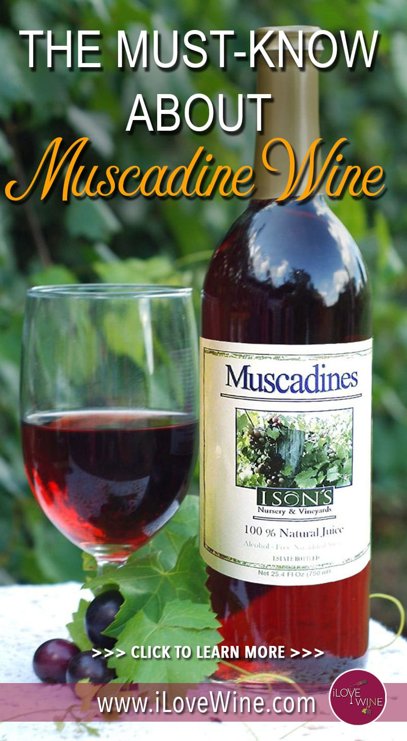 There are several characteristics of the Muscadine grape that make it unique, and its superfruit properties are one of its best qualities. With super high levels of antioxidants and ellagic acid, studies of Muscadine have shown that it can be effective at targeting illnesses. Click to learn more about Muscadine Wine! Love wine | Muscadine Wine | Unique Wine | American Wine #lovewine #wine #Muscadinewine