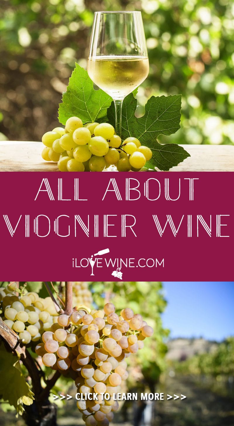 Viognier is a full-bodied white wine, originating from southern France but now grown worldwide. Click to learn more! Love wine | Viognier Wine | #lovewine #wine #viognierwine #viognier