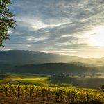 Our Cabernet Crush: Decoy Sonoma Cabernet Sauvignon 2015