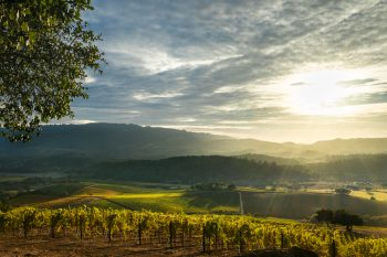 Terroir: Tasting the Earth in Your Wine
