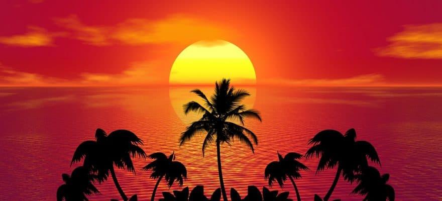 tropical palms palm wine health benefits